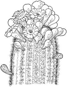 cactus coloring page printable cactus coloring pages coloring me