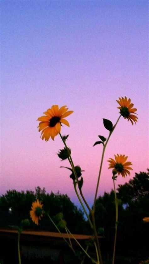 pin  kelsey abernathy  flowery aesthetic backgrounds
