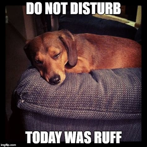 Dachshund Meme - 8 funny dachshund memes what every dog deserves