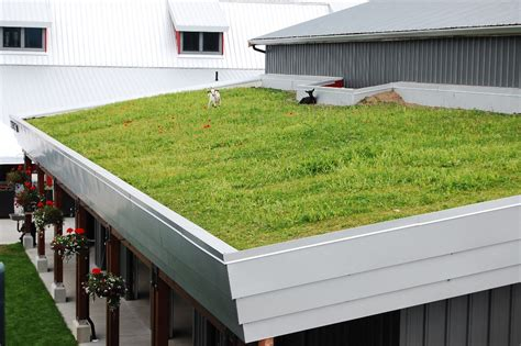 design guidelines green roofs green roofs and living walls streamline design
