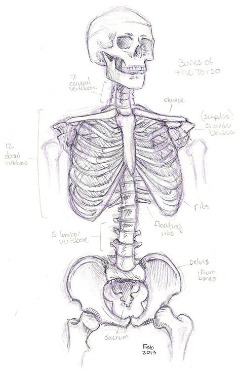 anatomy coloring pages skeleton anatomy skeleton coloring pages homeschool anatomy