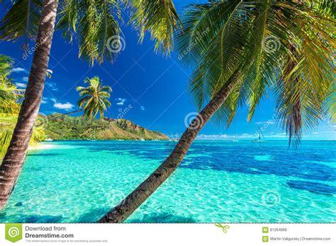gartenzäune bilder palmiers sur une plage tropicale avec une mer bleue sur