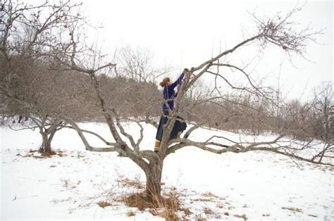 trimming fruit trees in winter best 25 pruning fruit trees ideas on