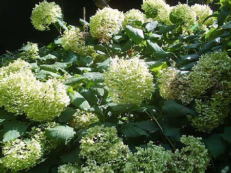 garten pflanzen versand winterharte pflanzen stauden blumen f 252 r den garten im