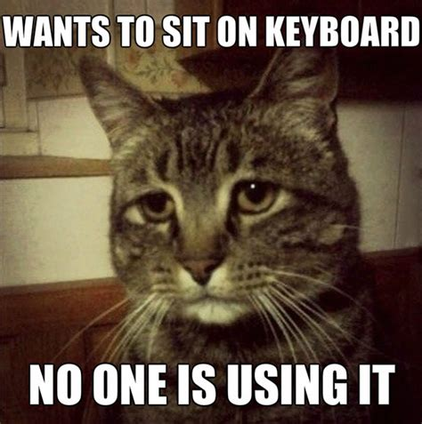Depressed Cat Meme - 10 hilariously heartbreaking first world cat problems