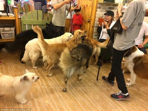 Paw some! Dog cafe in South Korea allows canine lovers to play with more than a dozen breeds for