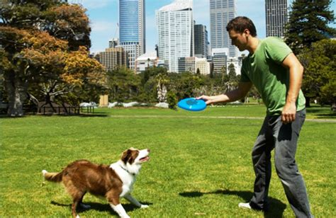 where can i play with puppies 10 lessons your can teach you about