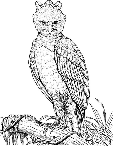 coloring page harpy eagle harpy eagle perched on a branch coloring pages coloring