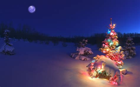 snow covered christmas tree lights wallpaper 1680x1050