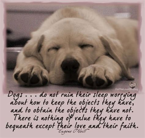 quote about dogs best friend quotes quotesgram