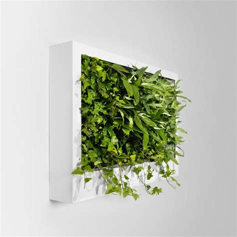 green wall decor plant walls an interior fanatic