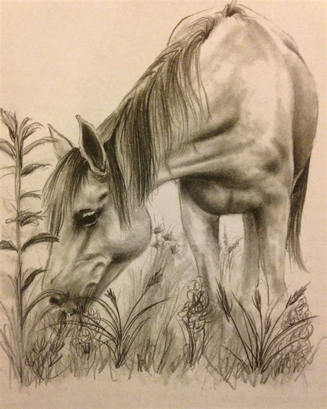 Sketches Horses by Realistic Sketch Www Imgkid The Image Kid