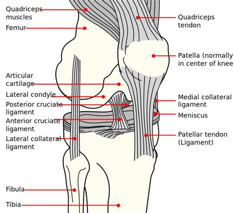 diagram of knee ligaments living the ooh i say matron