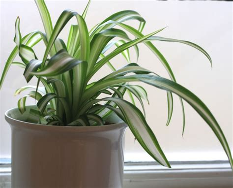 good house plants house plants are good for you growing nicely