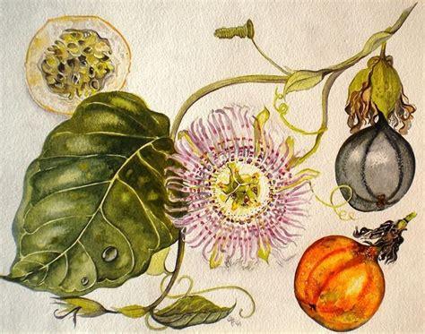 fiore della passione di cristo fiore della passione ricanti fiore della passione