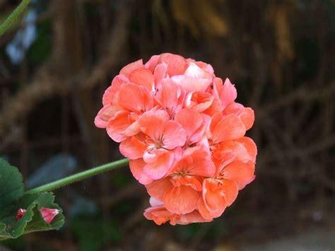fiori estivi da giardino fiori estivi bulbi fiori estivi giardino