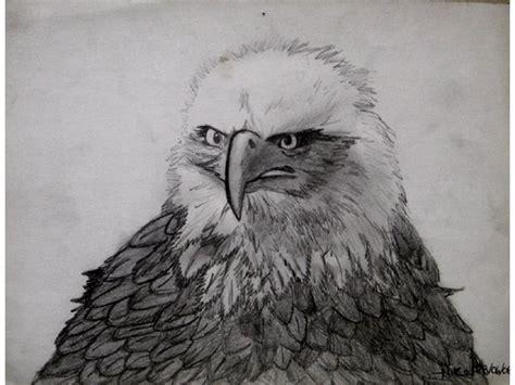 imagenes realistas de animales dibujos de animales realistas imagui