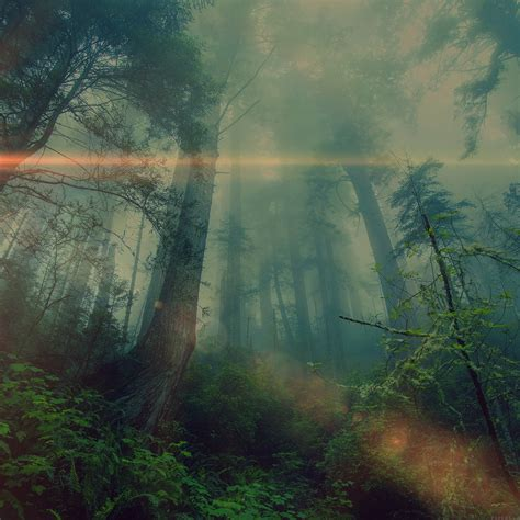 freeios mn forest wood fog flare nature green