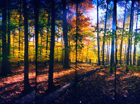 in fall quot forest in the fall quot by dmitrizzle artsocket art gallery
