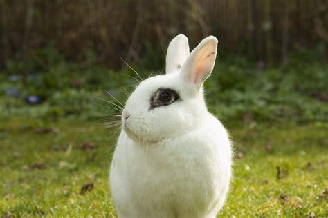 bis wann baby wie alt werden kaninchen markt de