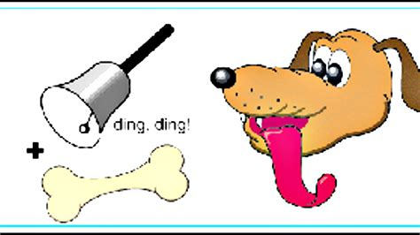 pavlov experiment classical conditioning ivan pavlov s experiments with stimuli and