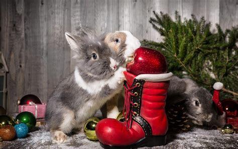 images of christmas rabbits christmas ornaments rabbits winter new year hd desktop