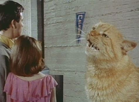film giant dog village of the giants 1965 cinema cats