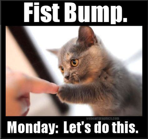 Memes About Monday - 300 best monday humor images on pinterest monday quotes