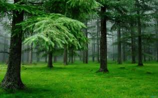Home Design 3d For Pc hdwp 44 green nature wallpapers green nature collection
