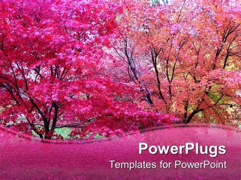 Autumn Pink powerpoint template pink japanese maple trees in fall