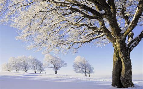 imagenes de arboles invierno los 225 rboles de invierno fondos de pantalla los 225 rboles