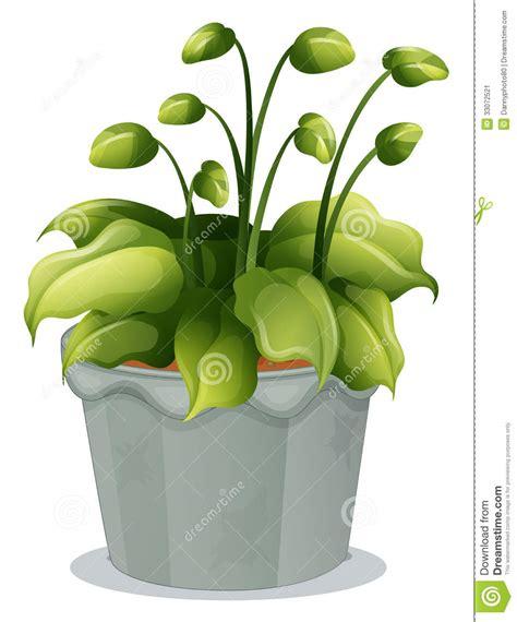 Impressionnant Plante Verte Dans Une Chambre #4: une-plante-verte-dans-un-pot-gris-33072521.jpg