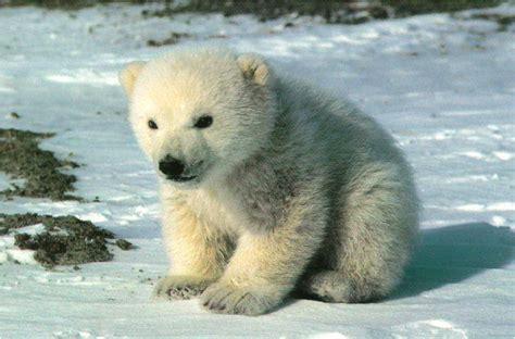 animals in the winter bean saturday safari winter animals