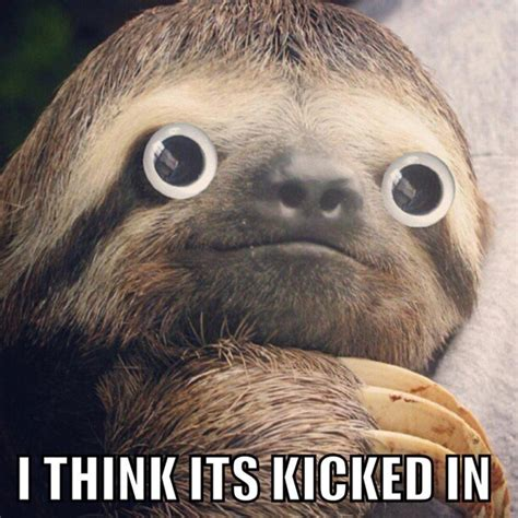 Sloth Meme Images - it has been decreed 2013 is officially the year of the