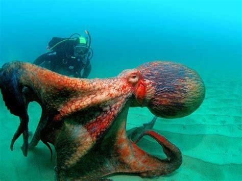 imagenes de animales invertebrados acuaticos animales acuaticos ecolog 237 a taringa