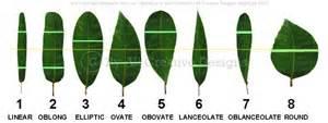 Tree leaf shapes http www allcreativedesigns com au pages leaf