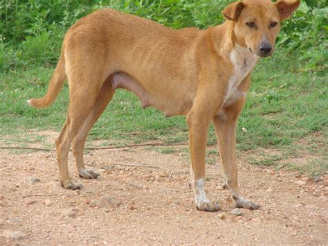 stray puppy stray india travel forum indiamike