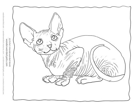 cat coloring sheets sphynx cat pictureshairless sphynx