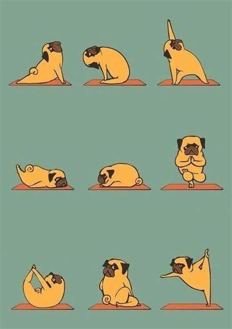 imagenes yoga graciosas las 25 mejores ideas sobre im 225 genes divertidas de