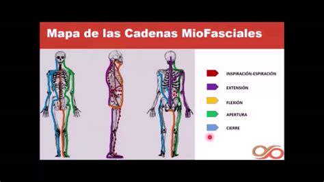cadenas musculares youtube introducci 243 n a las cadenas musculares youtube