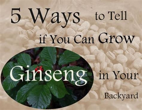 99 ways to tell 0224079255 129 best images about ginseng on see more ideas about shops nature journal and plants