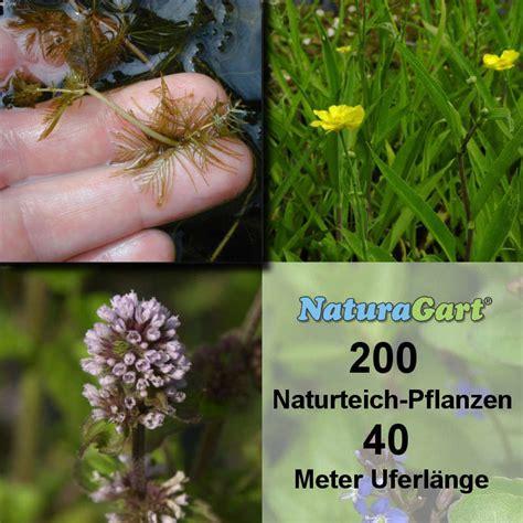 Produk Natur Shoo naturagart shop natur teichpflanzen 200 kaufen