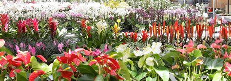 grossista fiori girotto piante girotto ingrosso e produzione fiori e