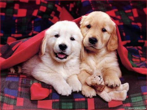 sweet dogs dogs images so sweet hd wallpaper and background photos 14060955