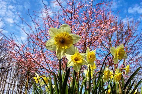 Blumen Im April by Der Fr 252 Hling Ist Da Jetzt Wohl Ganz Sicher Bernau Live