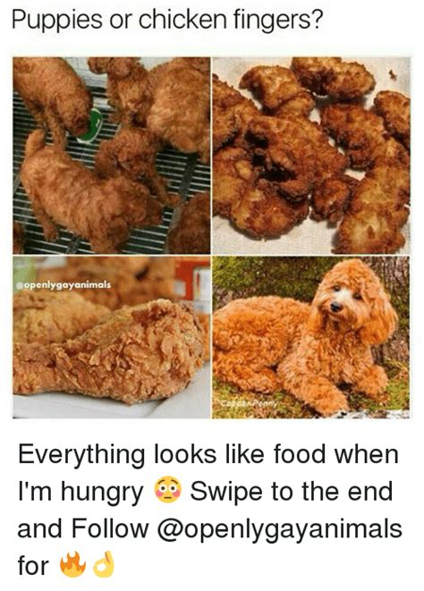 puppies that look like fried chicken 25 best memes about chicken fingers chicken fingers memes