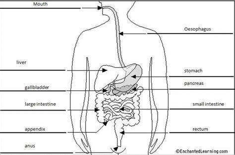 Digestive System Diagram Worksheet by Digestive System Labeling Worksheet Abitlikethis
