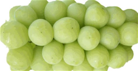 grapes toxic to dogs foods toxic to dogs