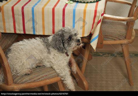 su una sedia su una sedia in chiudere foto stock 6318761