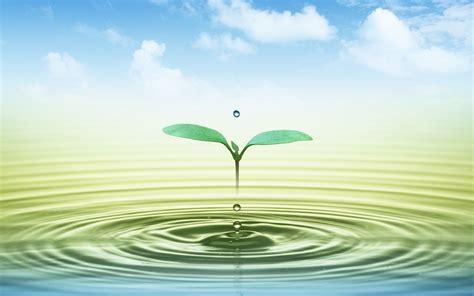 imagenes jpg para html marca de agua fresca fondos de escritorio de hoja verde